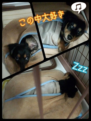 16-04-19-09-45-10-649_deco.jpg