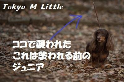 Jr - コピー - コピー - コピー.jpg